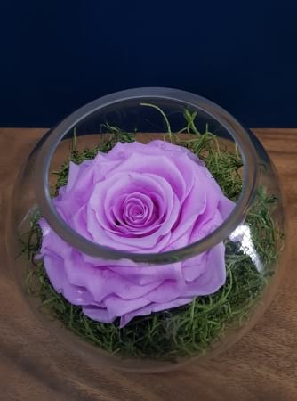 XL Lavender Preserved Rose