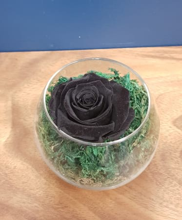 black beauty preserved rose (last one to five years)