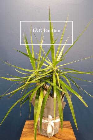 Great indoor plant