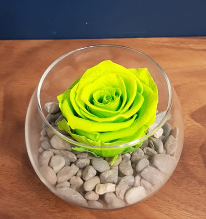 Vibrant Lime Green  Preserved Rose (Last 1 to 5 Years)