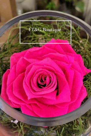 Large Hot Pink Preserved Rose