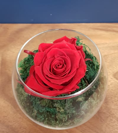 Red Preserved Rose(last 1 to 5 years)