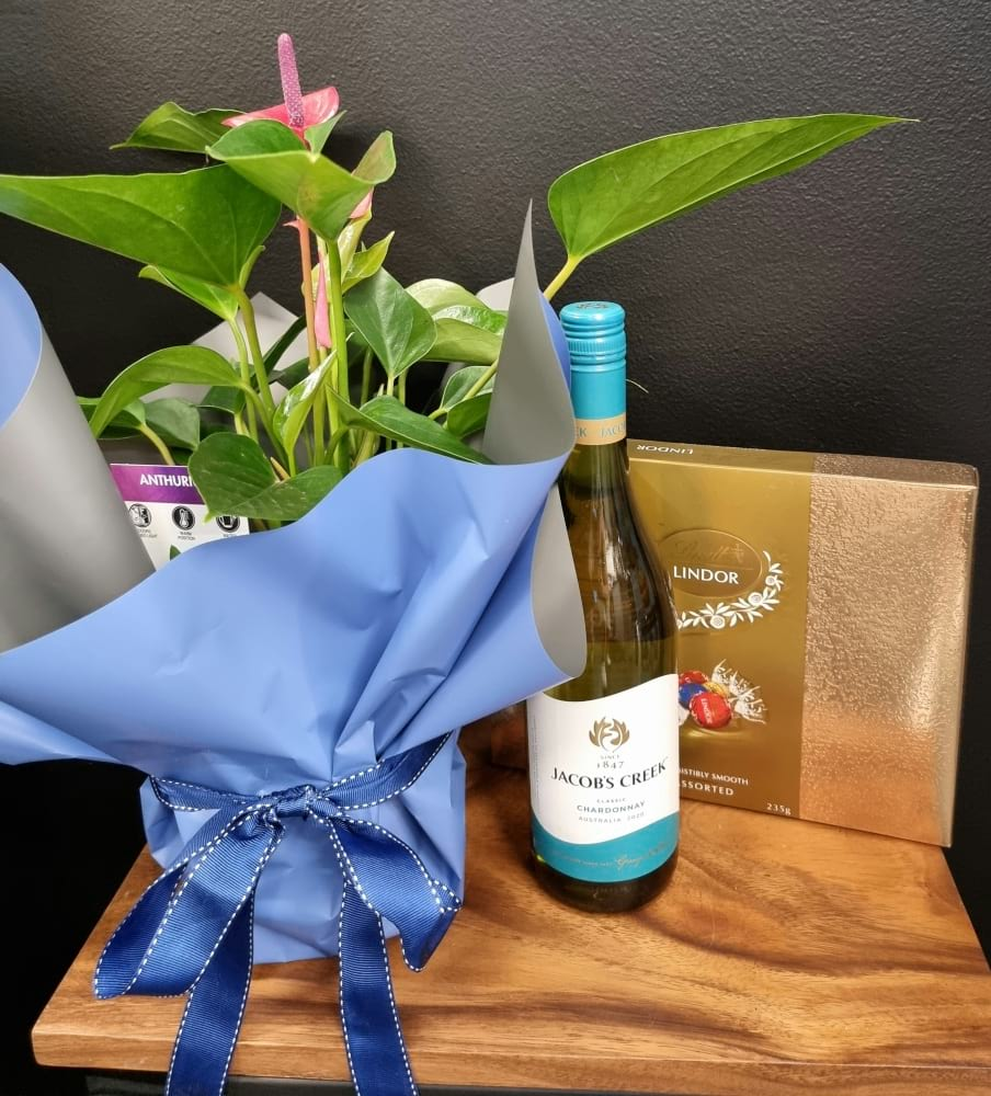 Anthurium Plant and Gift