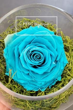 Large Hawaiian Blue Preserved Rose