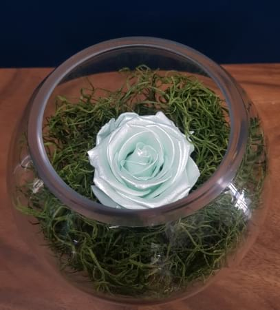 Mint Green Preserved Rose