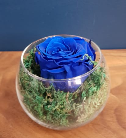 royal blue preserved rose (last one to five years)