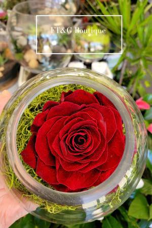 Large Dark Red Preserved Rose