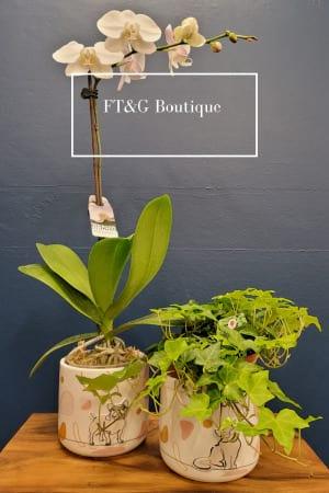 FT&G Designer`s Choice