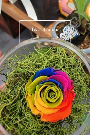 Preserved Rainbow Rose