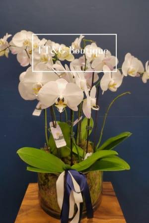 Alison`s Orchids