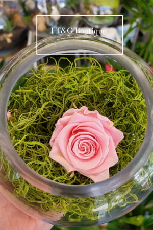 Small Pink Preserved Rose