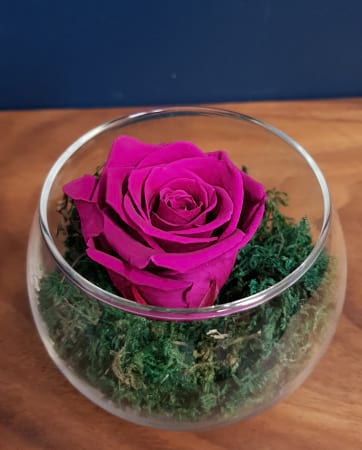 Plum Purple Preserved Rose (last 1 to 5 years)