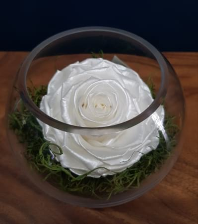 Mother Of Pearl XL Preserved Rose