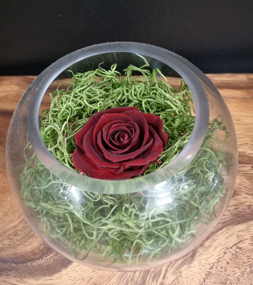 Small Dark Red Preserved Rose