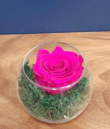 hot pink preserved rose (last one to five years)